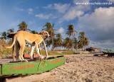 Praia dos Torroes, Itarema, Ceara 1044 091023 blue.jpg
