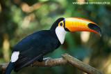 Parque das Aves - Foz do Iguacu- PR 0242.jpg