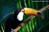 Parque das Aves - Foz do Iguacu- PR 0246.jpg