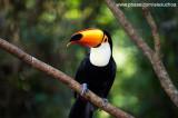 Parque das Aves - Foz do Iguacu- PR 0251.jpg
