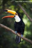 Parque das Aves - Foz do Iguacu- PR 0252.jpg