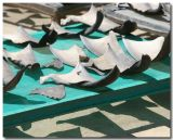 Shark Fins for Sale