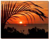 Palmy Sunset
