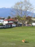 Falaise Park, East Vancouver
