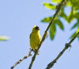 July 10 08 Sauvie Island Birds-9.jpg