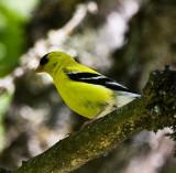 Birds Of Sauvie Island, July 10 08