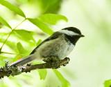 July 10 08 Sauvie Island Birds-27.jpg