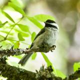 July 10 08 Sauvie Island Birds-29.jpg