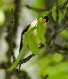 July 10 08 Sauvie Island Birds-34.jpg