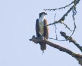 July 10 08 Sauvie Island Birds-58.jpg