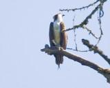 July 10 08 Sauvie Island Birds-61.jpg