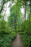 June 21 08 Portland Forest Park-14.jpg