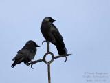 Birds in the village of Trujillo