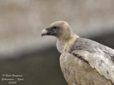 BIRDS OF MONFRAGUE PARK: THE LARGE BIRDS