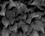 Flowers 00800.JPG