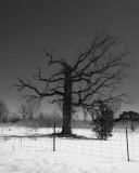 Rural Eastern Ontario 00059.JPG