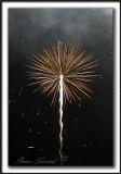 _MG_6214ab  -  UNE ÉTOILE ESTNÉE  /  A STAR IS BORN