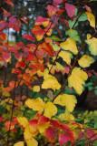Color Spectrum In One Shrub