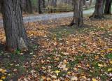 A Quiet Autumn Road