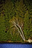 Algonquin Provincial Park 3