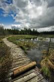 Algonquin Provincial Park 10