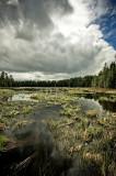Algonquin Provincial Park 11