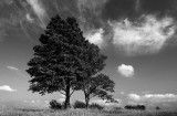 Two trees