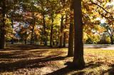 Autumn oak park