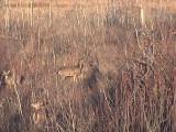 2009_11_02 Deeroflague - Count the deer