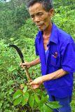 0019 Long Xian Qian discussing a medicinal plant.