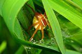 order Arachnida