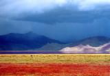 西藏 心靈的聖地 तिब्बत