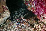 溫馨提示: 畫面內有3種蝦 (包括琵琶蝦)