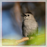 Mockingbirds&Co