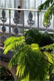 Balcony and fern