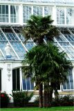 Palm and Temperate House