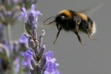 Bees 2009