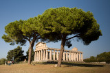 Pines & Temple of Athena