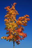 Autumn 2008 (1)