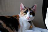 Bimbi, a short term 3rd cat