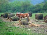 Bucolic scene in Navarra