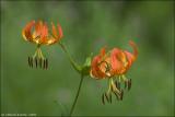 flowersfleurs