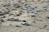 East-facing terns