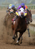 Rodeo and Horse Racing