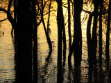 Trees in high water