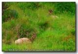 Camouflaged Elk