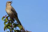 IMG_6428 birds.jpg