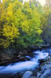 _DSC9787-Autumn-Leaves.jpg
