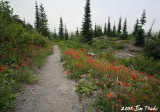 #1 Divide Trail