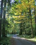 A forest road